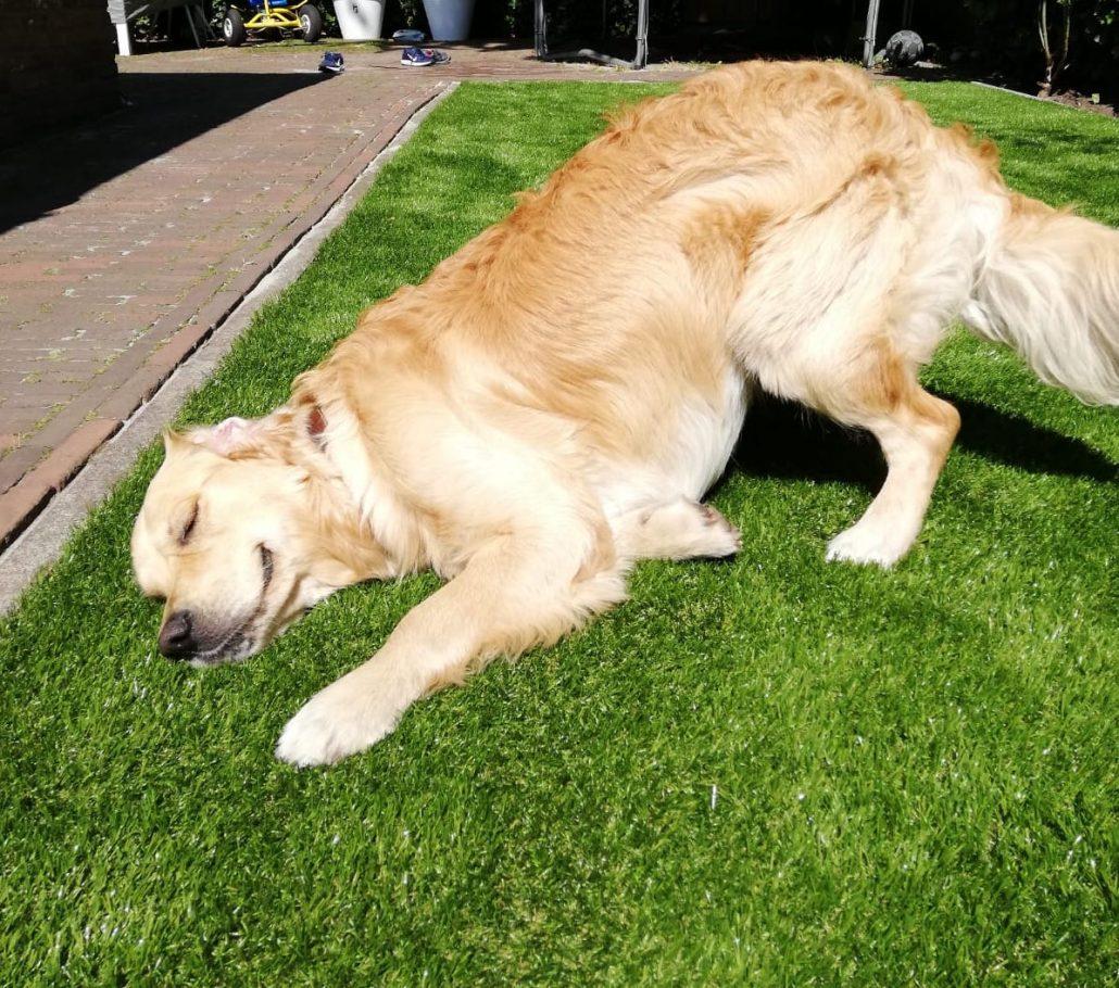 Kunstgras en hond Zeist